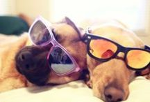For Dog Lovers! / Island Paradise Cottages Love Doggies (and their Owners)!  Give us a call for a great getaway anytime!