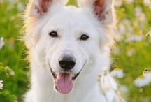 All-Natural Dog Tips