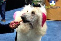 Barkworthies Fans / #Dogs love us!
