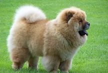 Pets / Get best and cheap products with pet coupon codes and promo codes for big discounts online