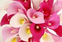 rozne farby-color / rozne farby