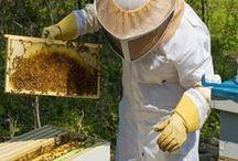včely a vozidlá