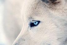 Animals / by Carolyn Laumann
