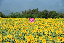 momo-imouto / モモ妹ブログの写真や、未公開写真をこちらで公開します。時々、モモの花やコモモも一緒に映ってるかもしれません。 http://momo-imouto.blog.so-net.ne.jp/