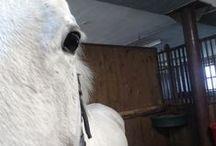 My Horse Diary
