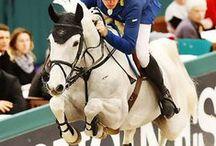 sports horses