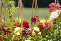 Bierkreek Rose Festival