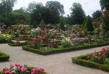 Bagatelle Rose Garden - Paris