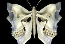my scull fascination