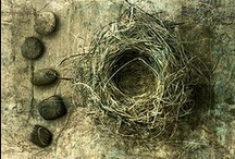 nests and eggs