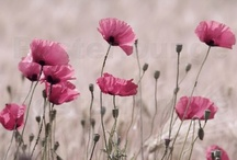flors / gardening