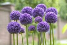 Garden Scene / No matter the color of your thumb, we have some easy tips and beautiful blooms for your garden.