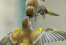 lovely birds / part of God creatures