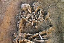 anatomy + the rest / anatomy, history, psychology etc
