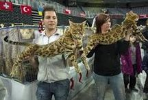 Cat show all over the world