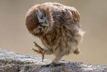 animals / hoot hoot