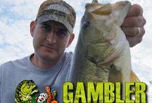 Bucket Mouth Bass / Largemouth bass, trophy-size pigs