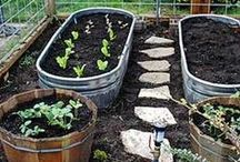 allotment ideas / Handy and inspirational ideas for your plot and growing veg.