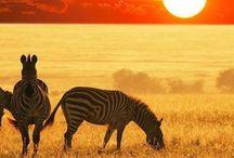 CONTINENTE AFRICANO / PAISES DEL CONTINENTE AFRICANO