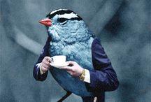 Birds / Life, freedom, Beauty.