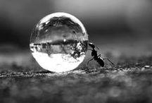 world of micro