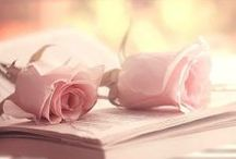 Rosas - Flores / Mis flores favoritas