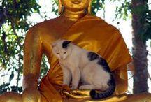 Gatos Miau / Lo hermoso de los Gatos, los amor como seres vivos independientes.