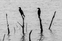 Fotograf / Black & white