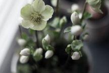 Blomster og planter / Blomster & planter