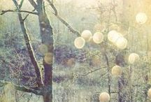 INSPIRATION - TREES + BRANCHES / Beautiful and inspiring images of branches and trees.