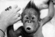 Monkeys, Chimps and Apes / by Pete Oren