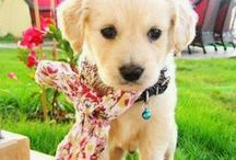 Lovely Pets / Cutest And Most Lovely Pets Photos http://aawpets.blogspot.com