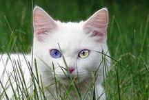 Kitty Cats / by Tonya Veazey