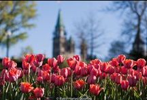 Ottawa Culture