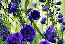 Plants / #plants  / by Beuna | Garden Inspire