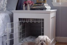 For the pets / #pets #dogs #cats #pettoys #petbeds #pethealth #healthypets
