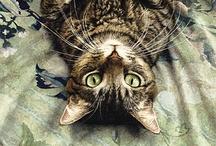 Animal Artwork / by Marie Kuiper