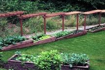 Edible Landscaping / #landscaping #gardening #garden #edibleyard #ediblelandscape #growingfood #foodscaping