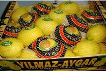 Turkish Fruits & Vegetables / Offers information on Turkish Manufacturers,Suppliers,Exporters of Fruits & Vegetables