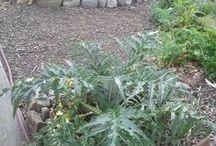 Garden Inspire / Posts from Garden Inspire's Blog - learn how to grow your own food.   #utahgardening #gardeningutah #gardenideasutah
