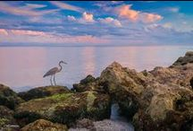 Beautiful Venice Florida / All things beautiful in Venice, Florida. From sunsets, flowers, trees and beaches. Venice has it all. / by Jean Trammell