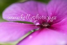 My pictures / Pictures I have taken that are also available on my website.