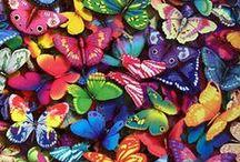 Butterfly ಌ⋰⋱ಌ