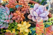 Succulents, Cacti & Houseplants