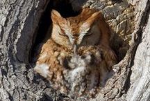 William Kramer Wildlife Photography / Here are some examples of some recent wildlife images.