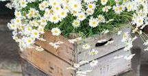 Crates for Weddings / Get creative with crates at your wedding.  Use them to create an entrance for your ceremony or stack them to display flowers, decor and photos of loved one.  Add tags for a table display or cards box.  Add hight to a dessert or drinks table.  Turn them upside down for an outdoor table.  Here are a few ideas to get you thinking ....... we have a large collection of crates for hire www.stargazeyweddingdecorhire.co.uk