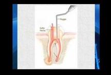 Holistic/Biological Dentistry
