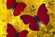 ✿ Ƹ̵̡Ӝ̵̨̄Ʒ Butterfly Ƹ̵̡Ӝ̵̨̄Ʒ ✿ / ♥ Butterfly Love ♥ (✿︶‿︶)