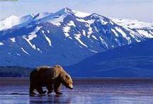 Alaska / Aljaška je na plochu největší stát USA. Jeho rozloha činí 1 717 854 km², na nichž žije asi 627 000 obyvatel. Hlavním městem je Juneau, největším Anchorage.