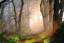 Woods / nature